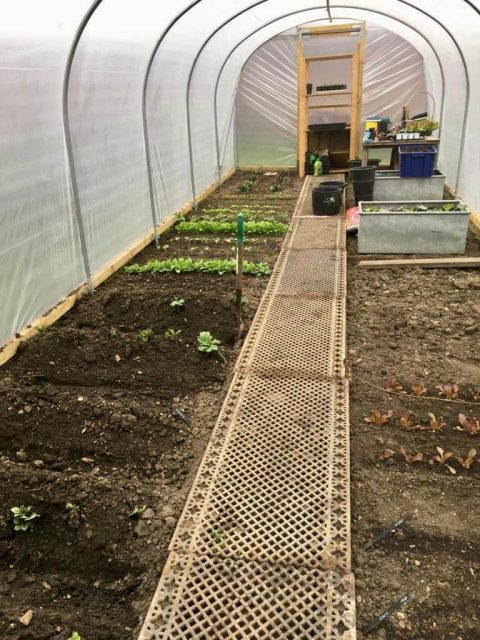 Poly Tunnel Gowth